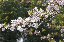 春天来了~~无忧岛邀您一起欣赏美丽的花花草草