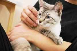 探索猫身上的奥秘:猫并没有完全被驯化,而且猫能用肢体表达想法