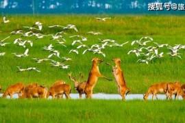 世界最大的野生麋鹿种群,总面积 78000公顷,国内外游客近100万人次
