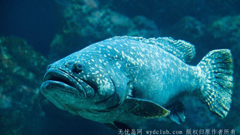 david-clode-iFQE-aCAWPU-unsplash-800x450.jpg 钓到264公斤巨型石斑鱼 16岁少女破世界纪录 大千世界